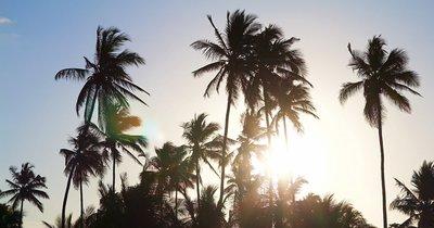 Zanzibar: Uroa z Prahy v lednu na 11 dní/ 9 nocí s polopenzí za 25 990 Kč!