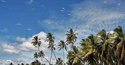 Srí Lanka: Chilaw z Vídně v lednu na 8 nocí se snídaní za 19 380 Kč!