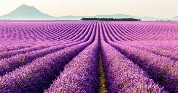 Provence nebo Azurové pobřeží? Z Vídně do Nice od 832 Kč/zpáteční letenky! I v období levandule!