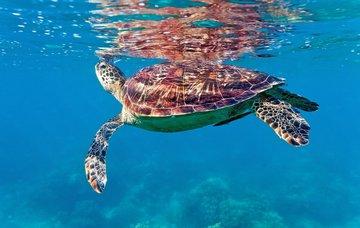 Tipy na aktivity na Svaté Lucii – krásné pláže, bohatý podmořský život a treky