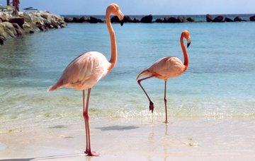 Tipy na aktivity na Arubě – bílé pláže, výborná kuchyně i noční zábava
