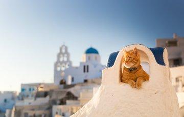 Kočky všude, kam se podíváte. Kde se v Řecku vzaly a jaký je jejich skutečný život?