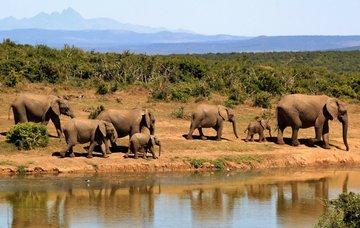 Tipy na aktivity v Jihoafrické republice – pozorování velryb, pláže a památky