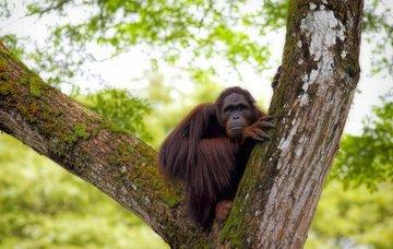 Tipy na aktivity v Malajsii – tropické pralesy i bílé pláže