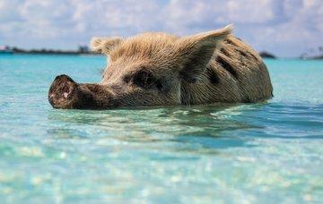Tipy na aktivity na Bahamách – bílé písečné pláže i ráj pro potápěče
