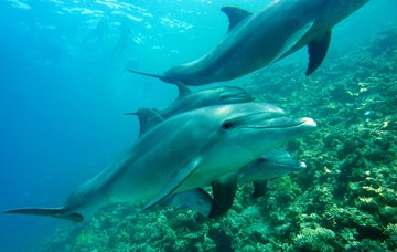 Tipy na aktivity na Cookových ostrovech – bílé pláže a oceán plný delfínů a velryb