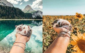 Tohle je Herbee, ježek, který cestuje a má lepší život než vy