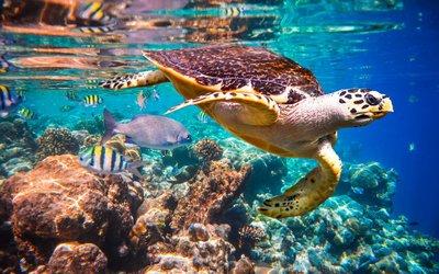 Marsa Alam: Potápějte se do světa barevných korálů