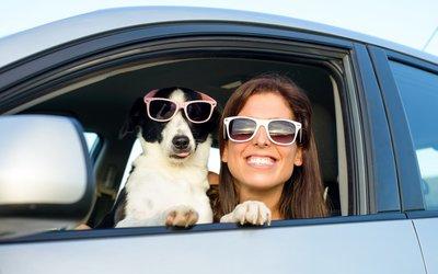Cestování se psem do zahraničí