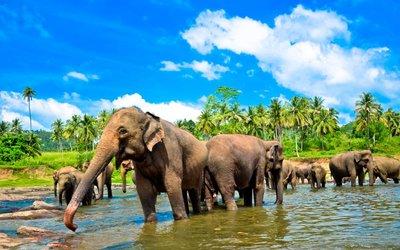 Srí Lanka: Vydejte se pozorovat koupající se slony v exotickém ráji