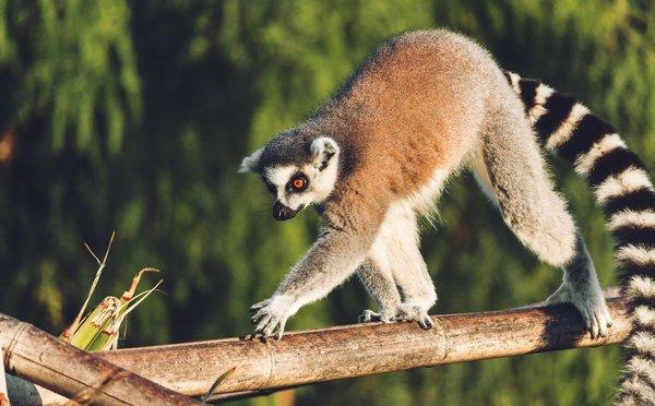 Tipy na aktivity na Madagaskaru – památky, národní parky i krásné pláže