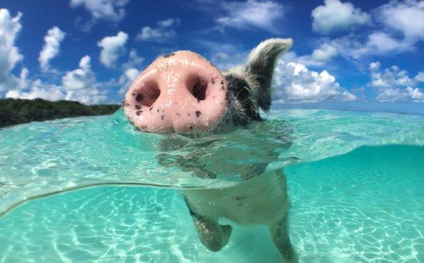 7 neuvěřitelných ostrovů, kde vládnou zvířata