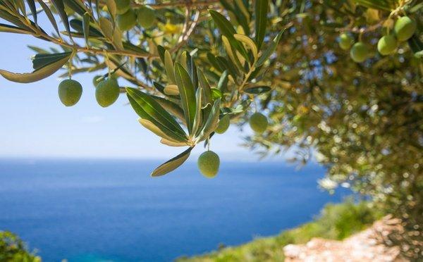 Snažím se žít v souladu s potřebou olivy, říká Eva Prifti z Korfu