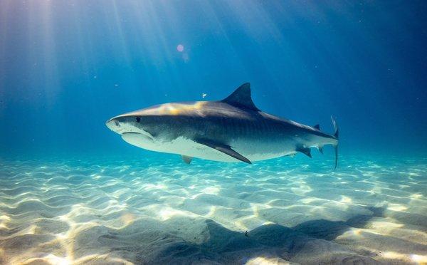 Útok žraloka: Vše co potřebujete vědět, abyste mu zabránili