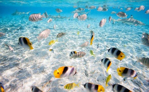 Tipy na aktivity ve Francouzské Polynésii – panenská příroda i krásné pláže