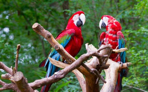 Tipy na aktivity v Kostarice – národní parky i romantické vodopády