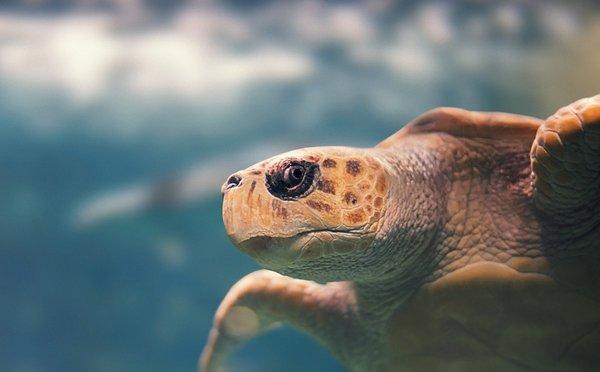 Tipy na aktivity na Guadeloupe – romantické pláže, sopečné vrcholy i neprostupná džungle