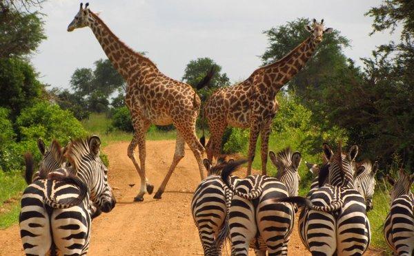 Tipy na aktivity v Tanzánii – safari, výstup na Kilimandžáro i odpočinek na pláži