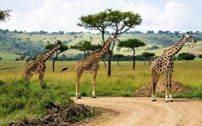 Průvodce Keňa