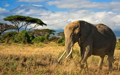 Průvodce Tanzanie