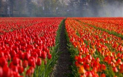 Průvodce Nizozemsko