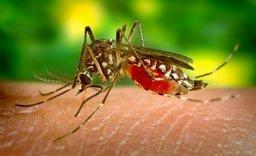 Srí Lanka – výskyt horečky Dengue